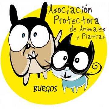 P33 Burgos01