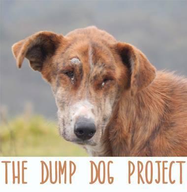 P56 Dump Dog01