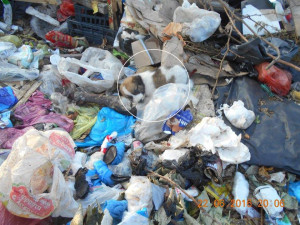 P56 Dump Dog02