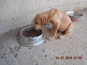 P56 Dump Dog09