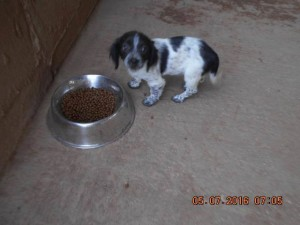 P56 Dump Dog11