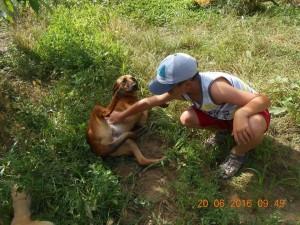 P56 Dump Dog22
