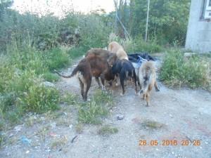 P56 Dump Dog26