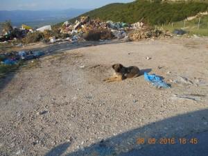P56 Dump Dog27