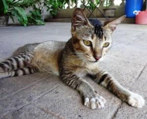 P60 Ha Ha Lanka06