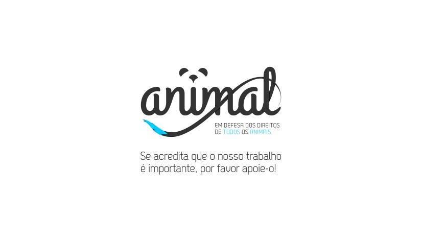 P62 ANIMAL01